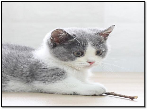 Pet Catnip